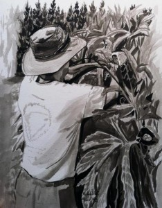 Dan's Okras - Brush and Ink on Paper by Michele West
