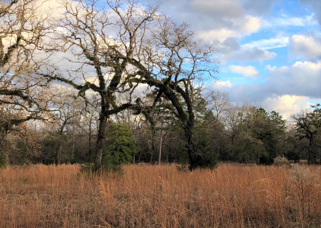 Alabama Field | Image Sarah West